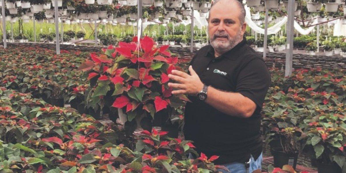 Resurge industria de pascuas en la isla tras el huracán María