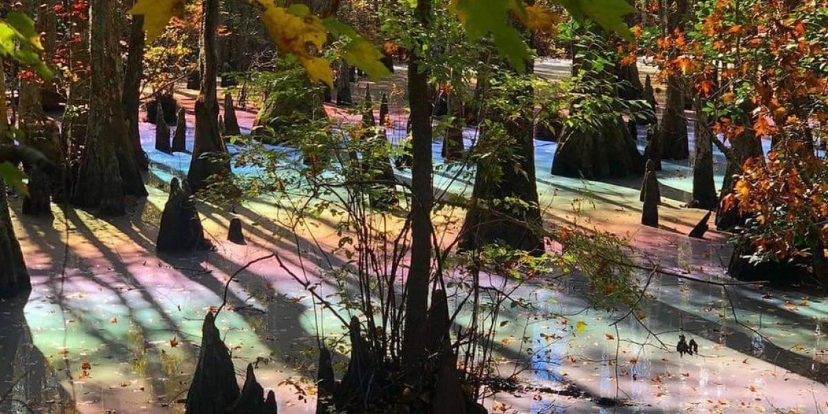 Pântanos nos EUA ganham cores do arco-íris, entenda o fenômeno