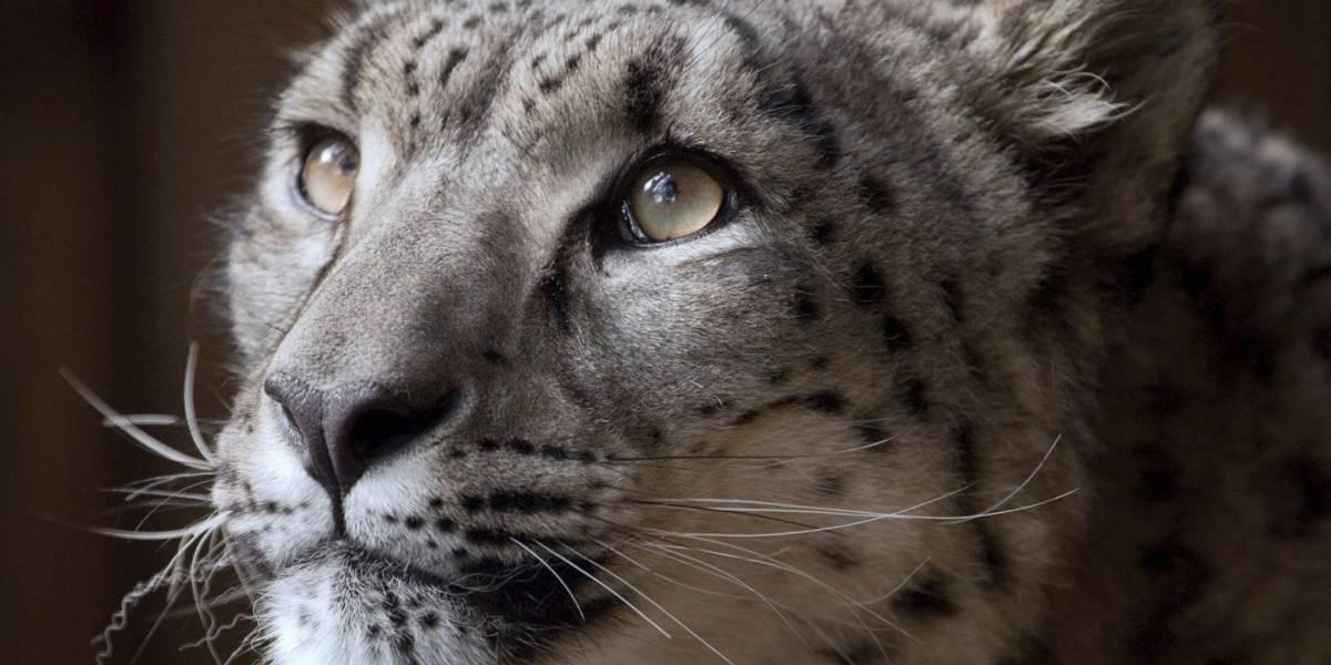 Zoológico defiende decisión de matar a tiros a leopardo