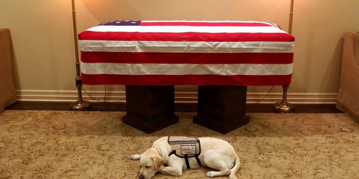 Os cães e gatos que acompanham líderes políticos pelo mundo