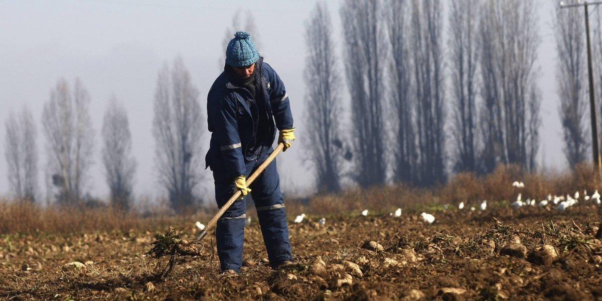 Los azotes del cambio climático en Chile: Cómo la fruta, el mar y la Antártica nos hablan del futuro que se viene en 50 años