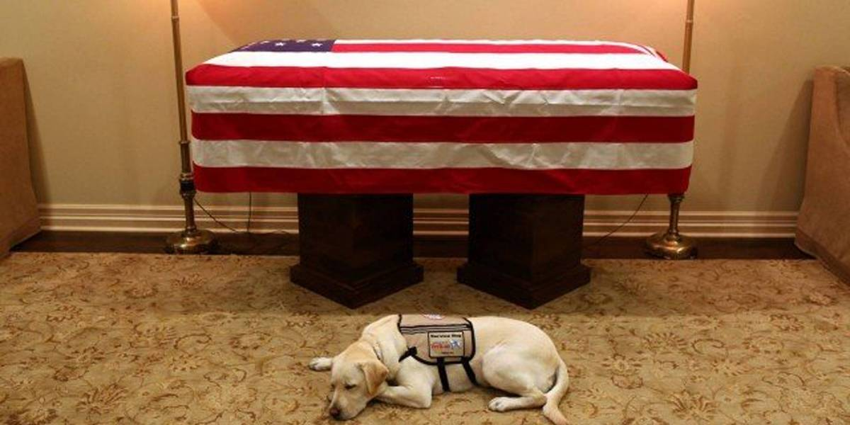 Cachorro de George H. W. Bush é visto deitado ao lado de caixão