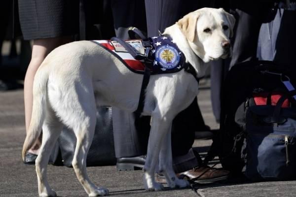 Perro fiel de George Bush