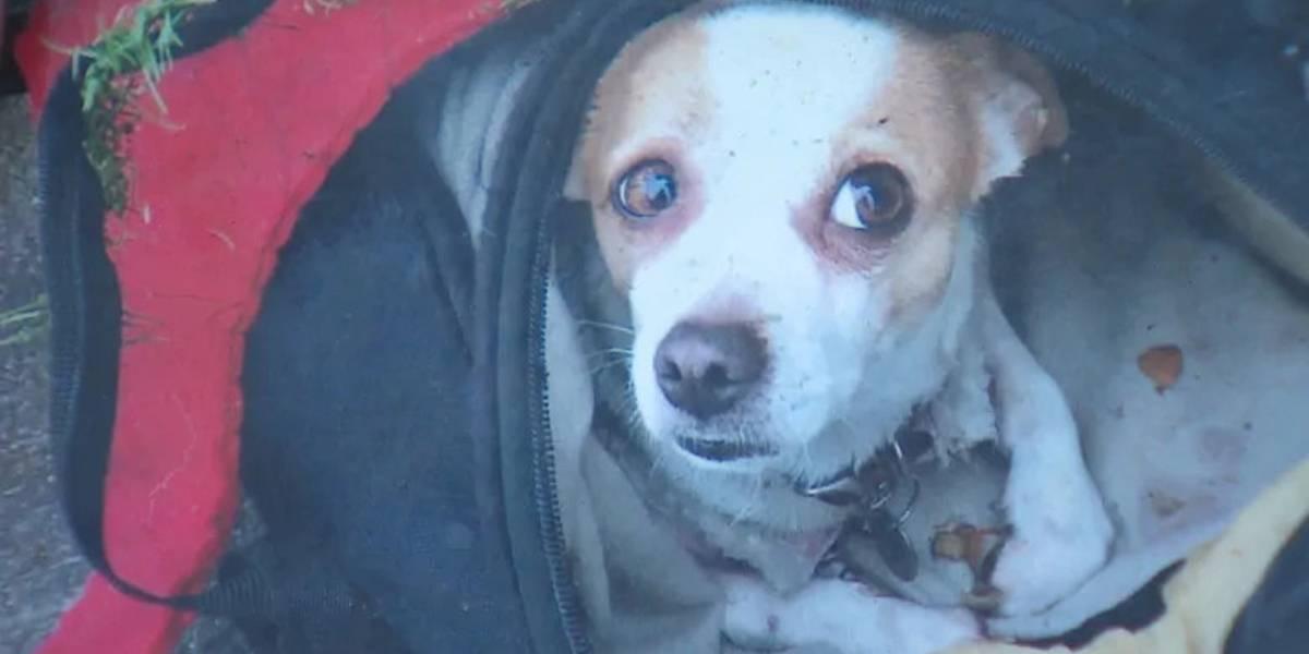 Sem-teto entra em desespero após sumiço de cão: 'Não se rouba o cachorro de alguém'