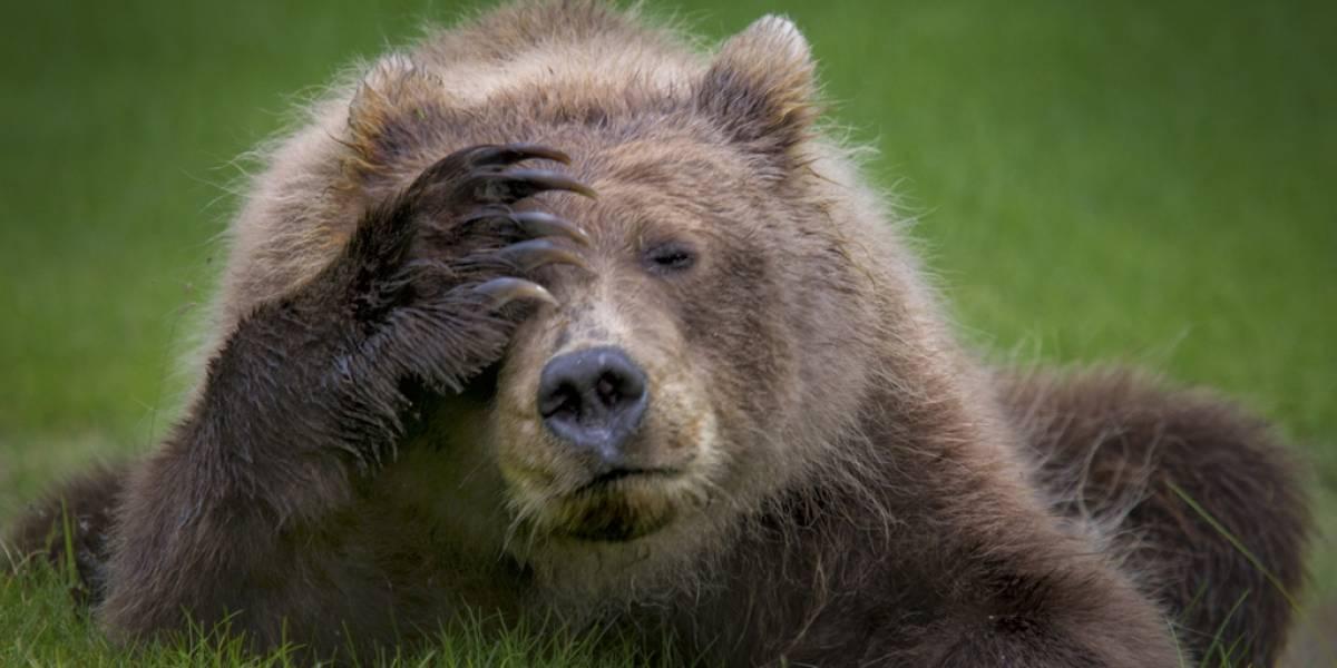 Disfruta de las fotos más divertidas de la vida salvaje