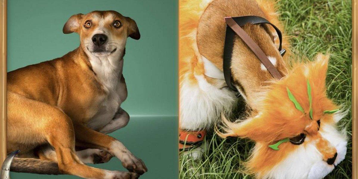 Cachorros fazem cosplay de jogo em campanha de adoção