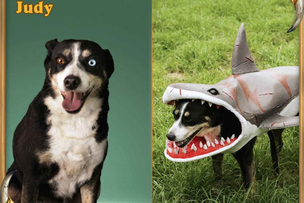Gral, o Tubarão: Judy, a cadelinha com olhos coloridos, representa perfeitamente Gral, o Tubarão. Ela é muito alegre e adorou se fantasiar Divulgação