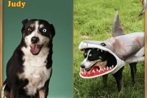 E quase ninguém pode perceber o cão por baixo desta fantasia de Shark