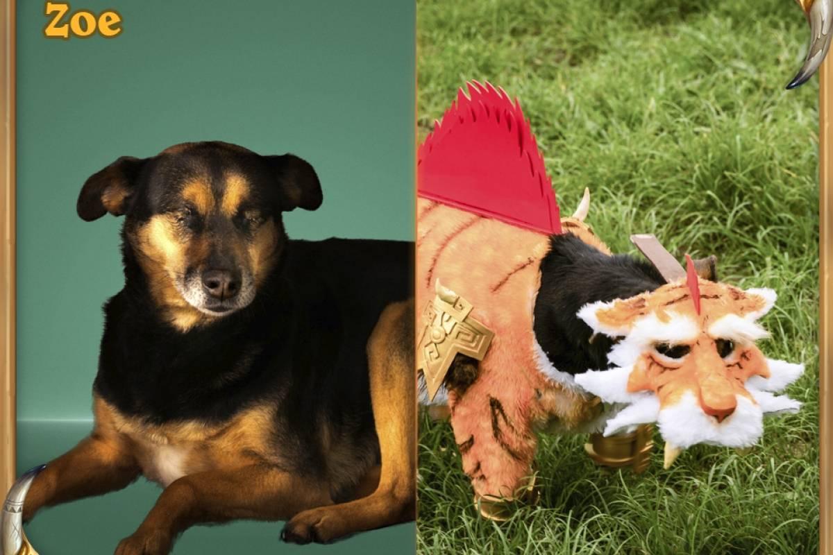 Shirvallah, a Tigresa: A Zoe é uma das várias doguinhas especiais do abrigo. Mesmo sendo muito nova (só 3 aninhos), ela perdeu os dois olhos. Mesmo assim, ela é um docinho, cheia de determinação, e agora representa a orgulhosa loa Shirvallah, a Tigresa Divulgação