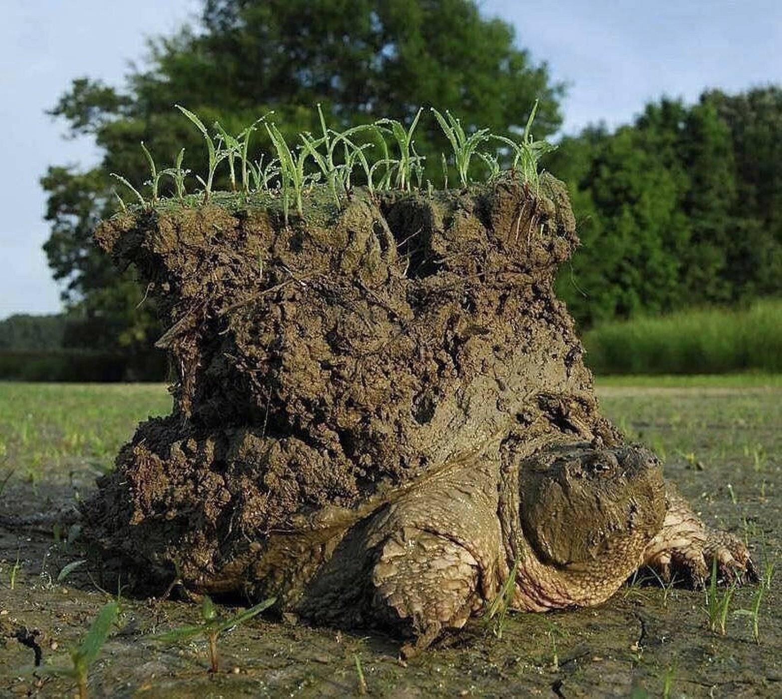 """Una fotografía de una tortuga """"con un mundo sobre su caparazón"""" se hizo famosa en internet y resultó ser real"""