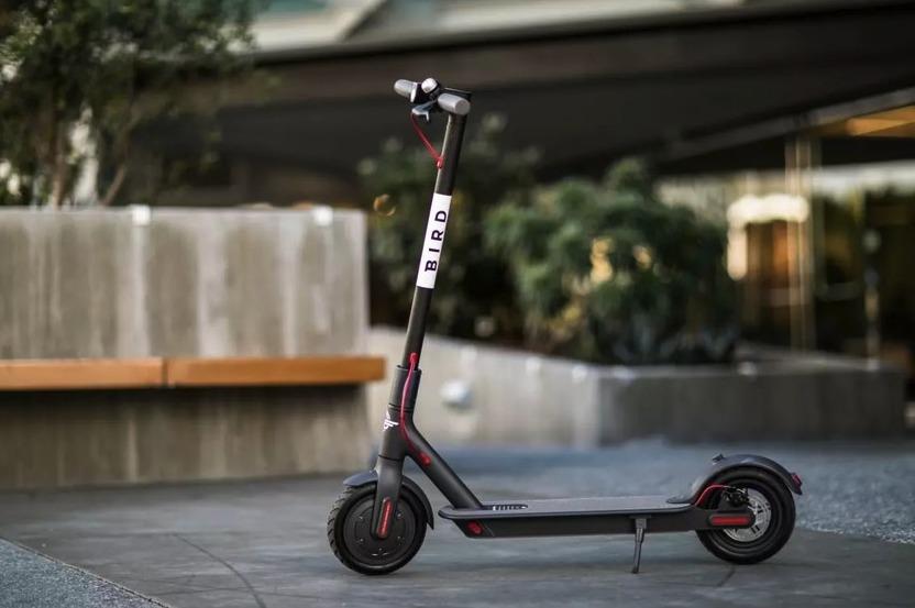 scooter bird