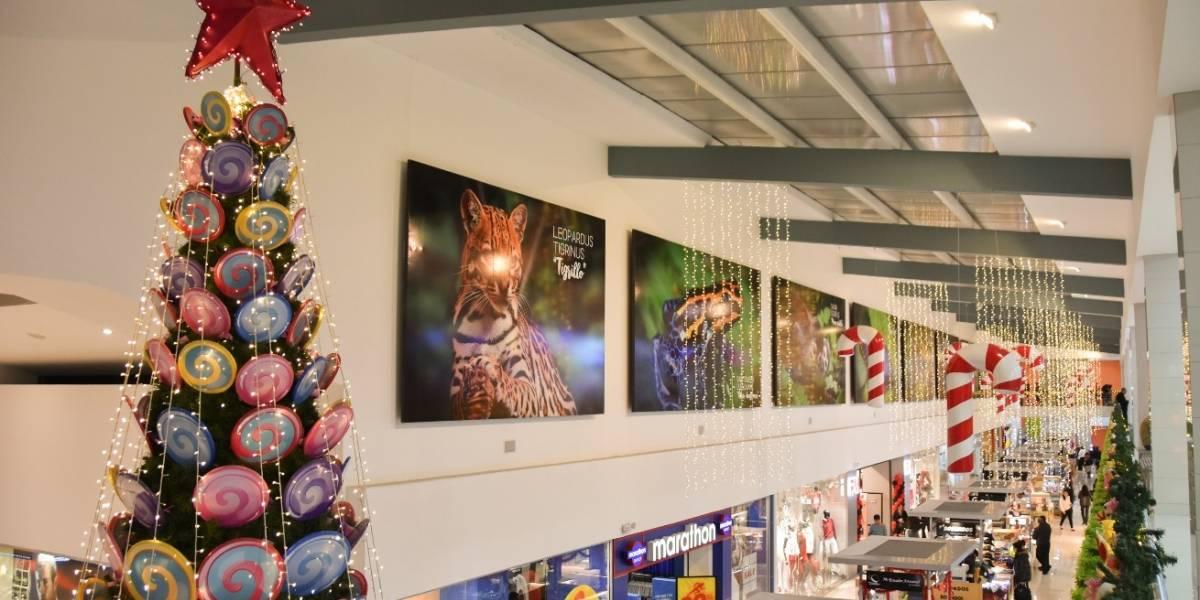 Navidad: Época de fidelización a través del marketing experiencial