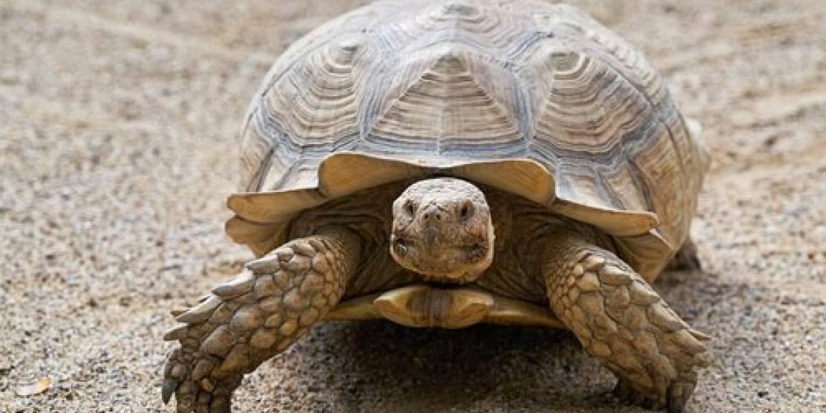 Parque Nacional Galápagos se pronuncia sobre video de Nacho sobre una tortuga