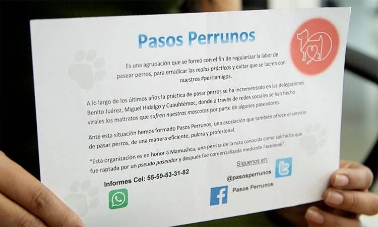Pasos Perrunos busca regular el trabajo de paseadores de perros UNO TV