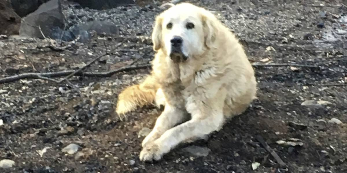 """Perro sobrevive a incendios en California y cuida la """"casa"""" de sus dueños"""