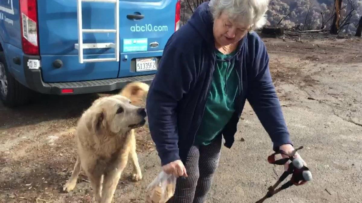 """El momento del reencuentro entre """"Madison"""", el perro, y Andrea Gaylord"""