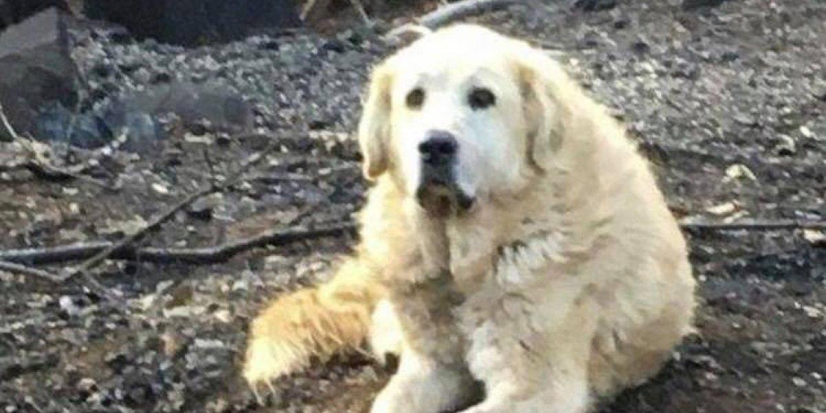 """""""Nunca te des por vencido"""": perrito sobrevivió a incendios en California y esperó a su familia entre los escombros durante un mes"""