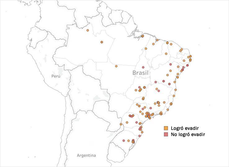 Brasil gráfica