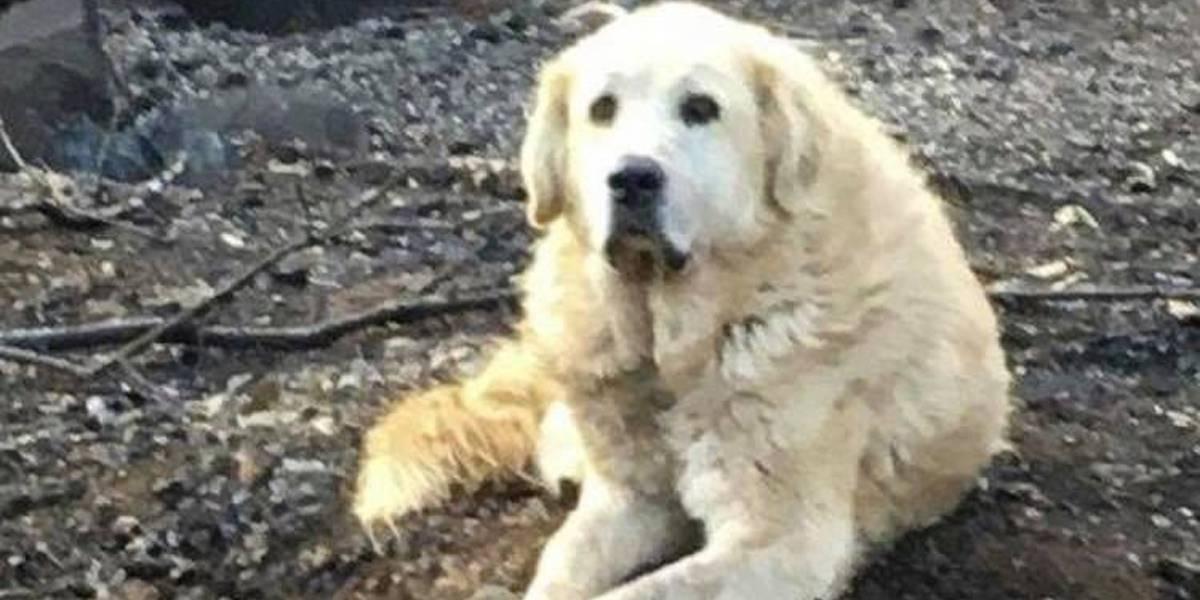 Cachorro que sobreviveu a incêndio ficou um mês esperando família voltar