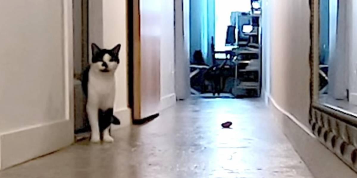 Instaló cámaras y grabó en secreto a su gato para saber qué hace cuando está solo en la casa: el resultado se volvió viral