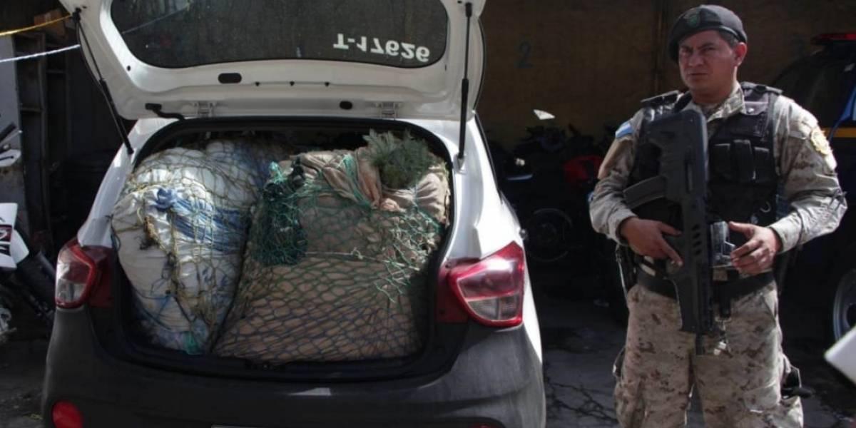 Un taxista es el primer capturado por tráfico ilegal de pinabete
