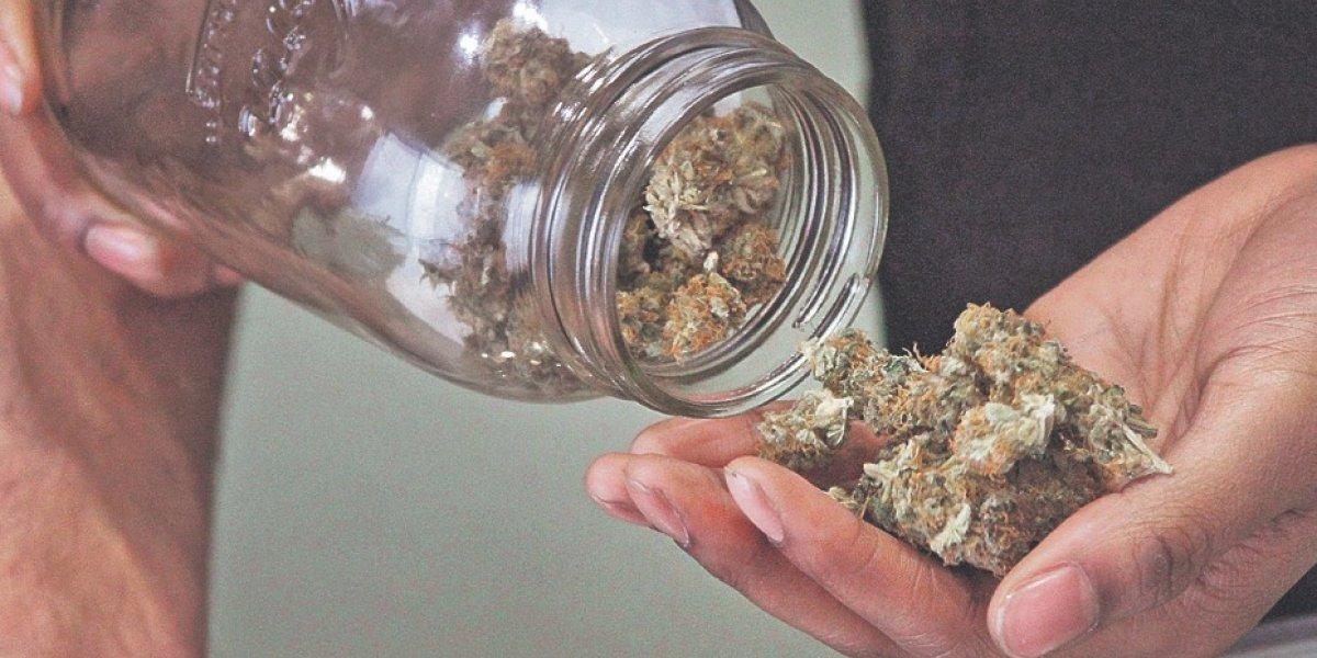 Piden aprueben proyecto para proteger pacientes de cannabis en el trabajo