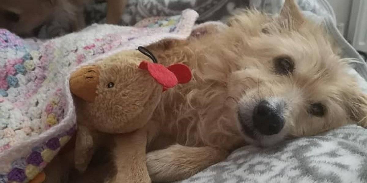 La triste historia de Pinocho, un perrito que pasó su vida como esclavo sexual