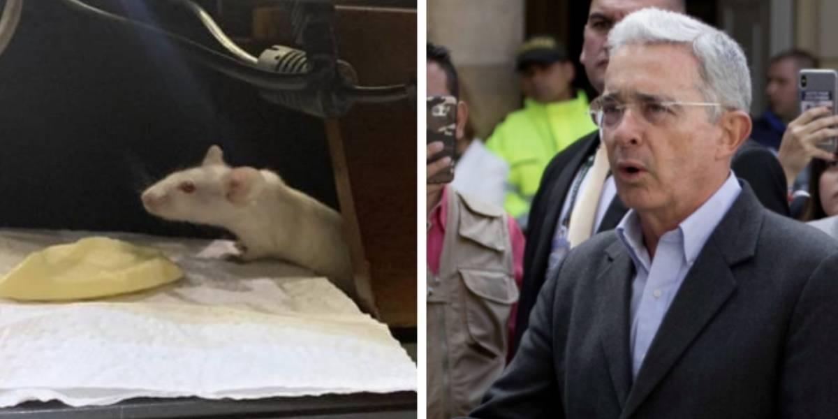 """Uribe dice que los ratones que arrojaron corresponden a un rito de """"brujería"""""""