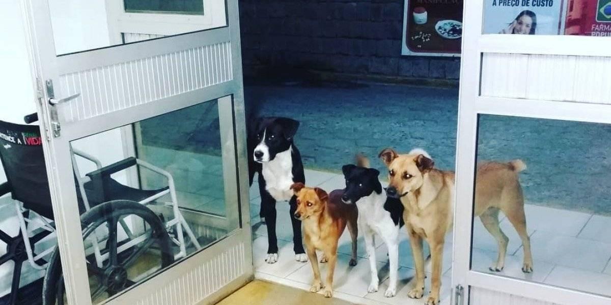 Cuatro perros esperaron por horas fuera de un hospital a que su dueño fuera atendido en urgencias