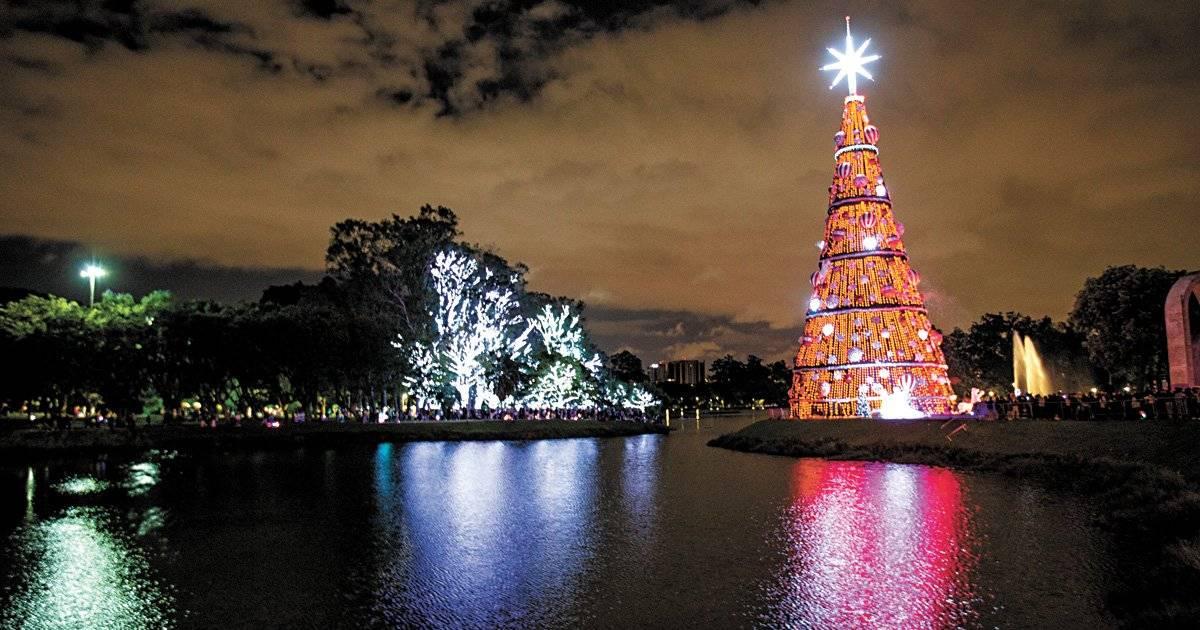 Árvores iluminadas no Ibirapuera Foto: André Porto / Metro Jornal