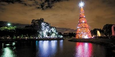 Árvores iluminadas no Ibirapuera