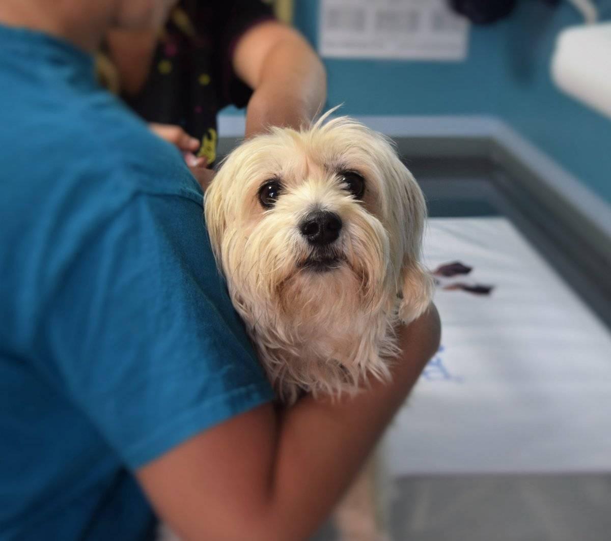 cão_ cachorro_ veterinário