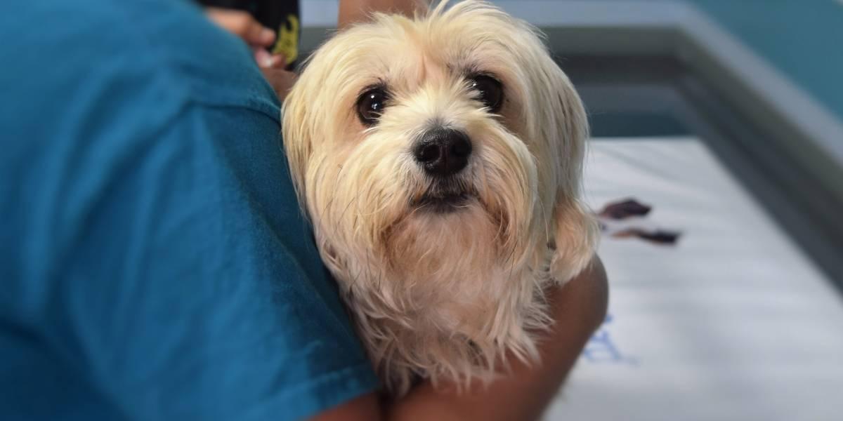 Patinha Vermelha: Conheça (e ajude!) a campanha de doação de sangue para cães
