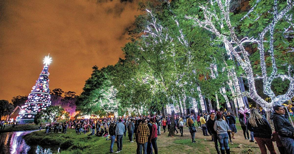 Bosque iluminado no Parque do Ibirapuera Foto: André Porto / Metro Jornal