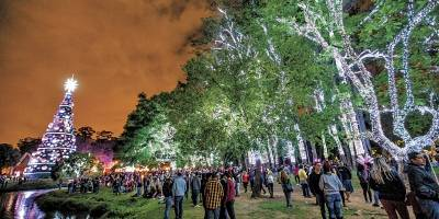 Bosque iluminado no Parque do Ibirapuera
