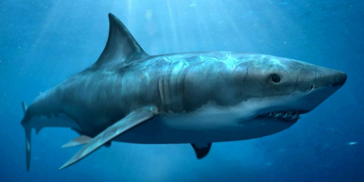 Tiburón gigante es encontrado con enorme mordida en su cabeza