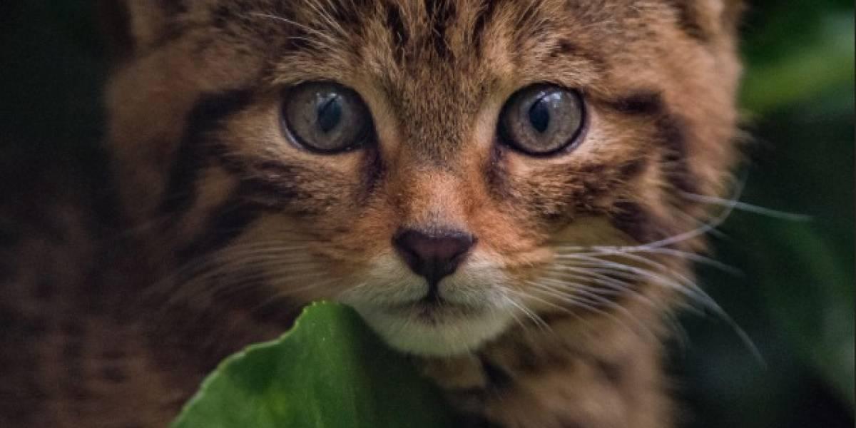 Animales salvan ilesos de gran incendio en zoológico de Inglaterra