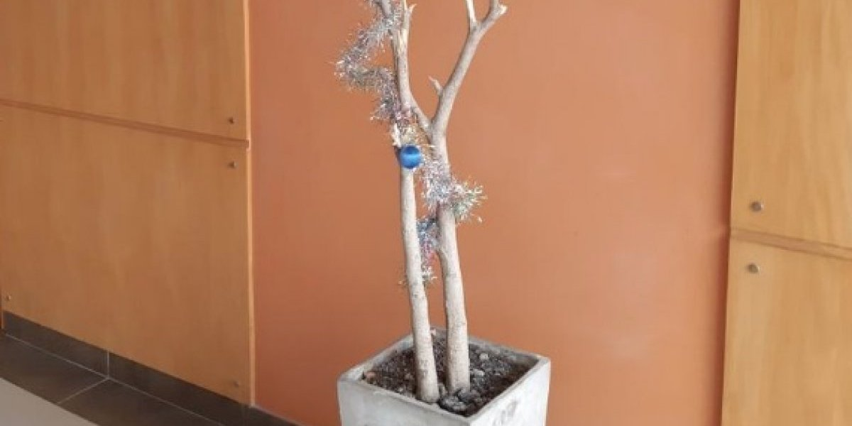"""""""Es el monumento a la miseria"""": se quejó del árbol de Navidad que pusieron en el edificio y causó furor en las redes sociales"""