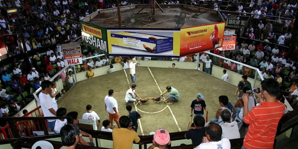 Pedirán eximir a Puerto Rico de la prohibición de Peleas de Gallo