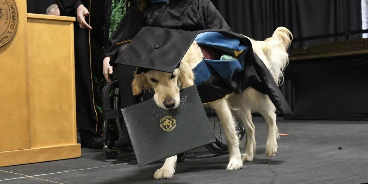 Perro recibirá diploma de maestría en Universidad de Nueva York