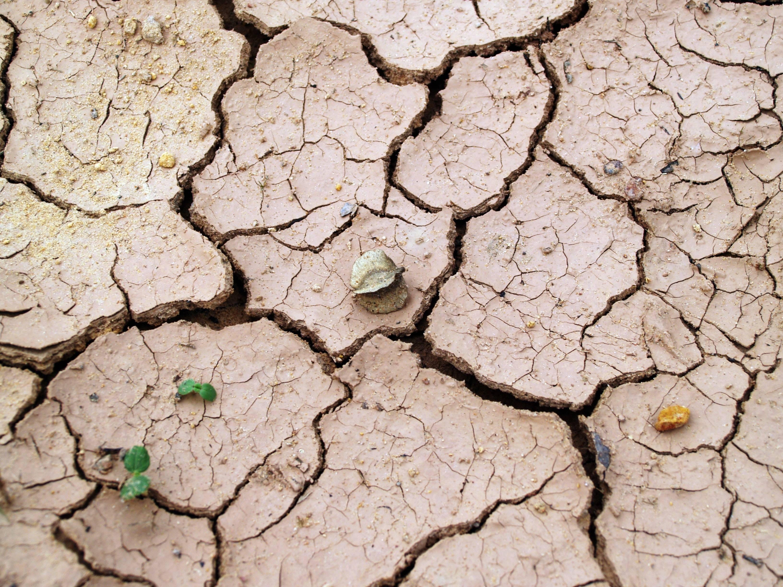 Gracias a la humanidad, el clima de la Tierra podría volver a ser el mismo de hace 50 millones de años