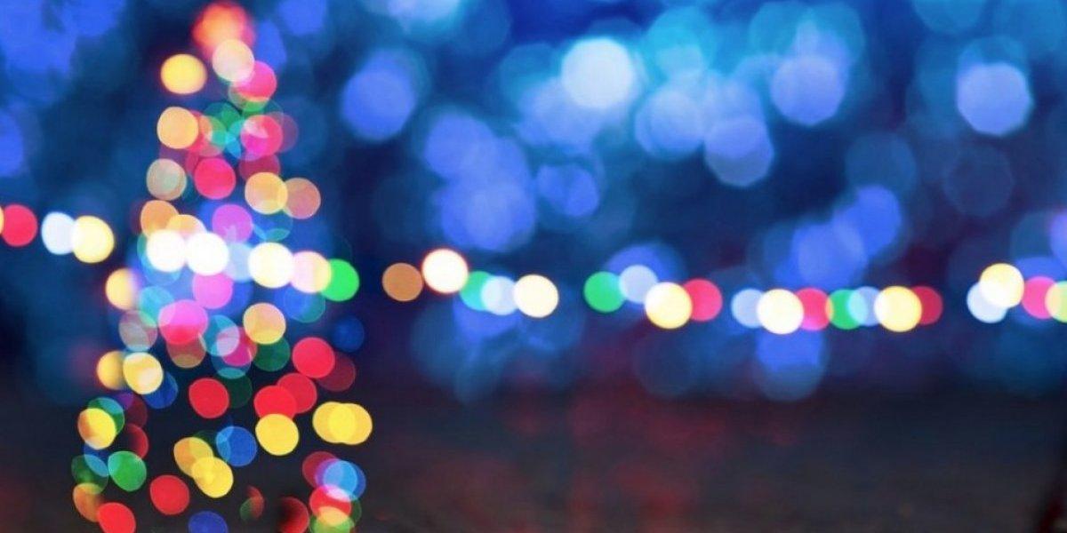 Recursos Naturales establece centros de reciclaje de árboles de Navidad