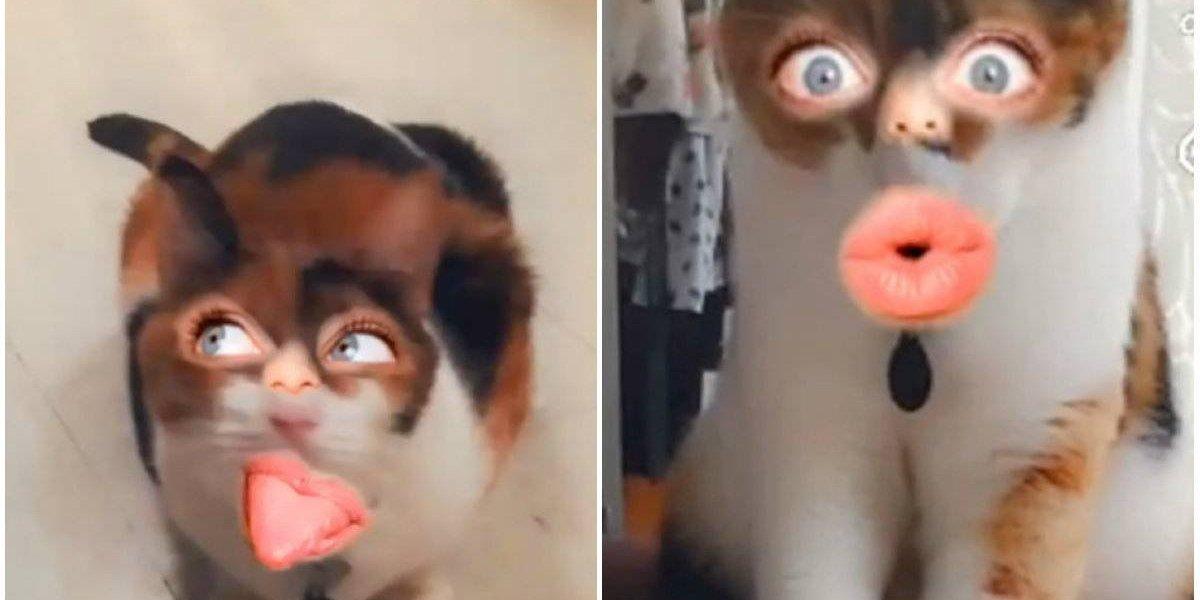 Snapchat lanza primer lente para poner cara de humano a los gatos