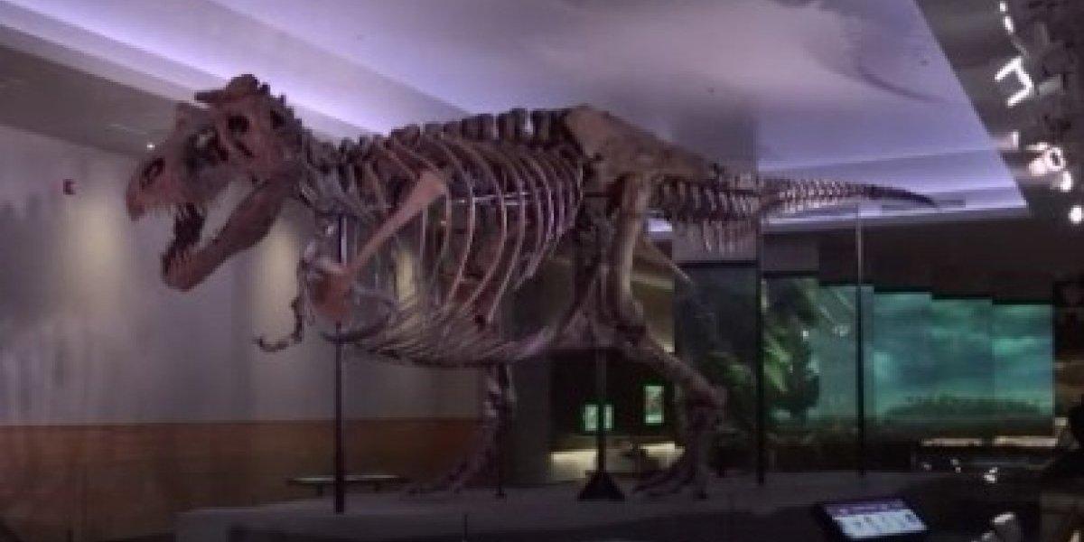 Esqueleto más grande de tiranosaurio regresa a museo en Chicago