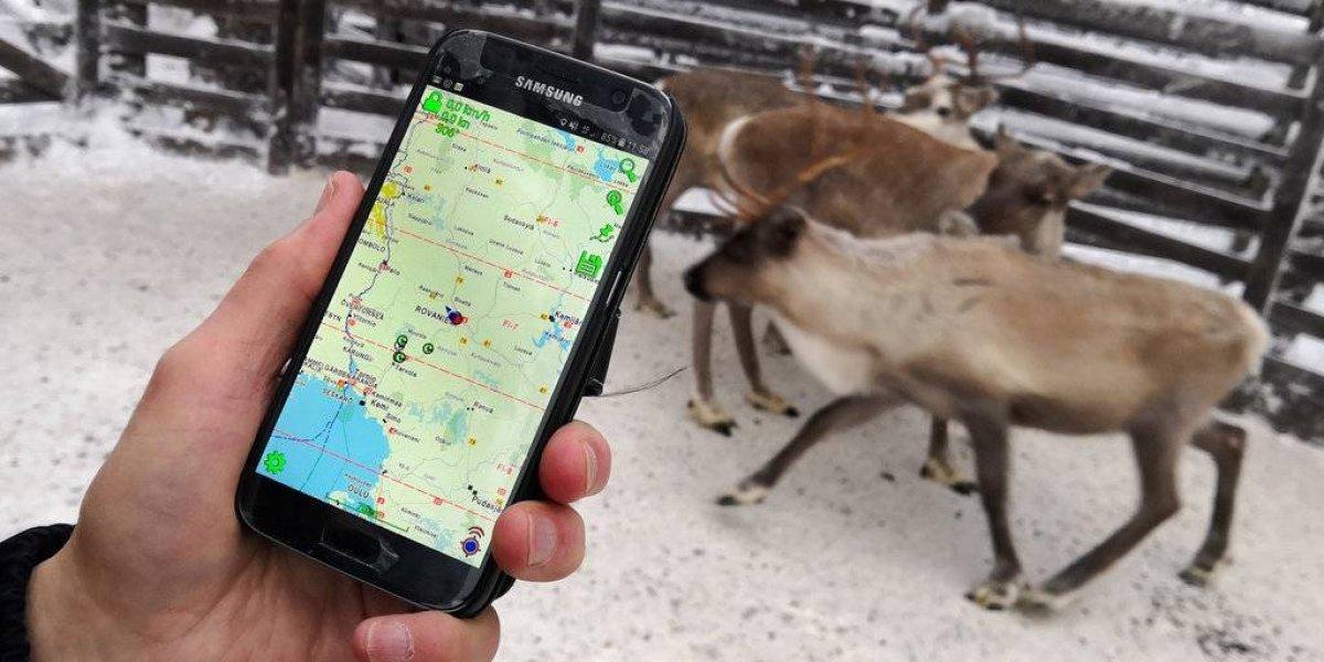 Tecnología ayuda a ubicar renos en zona remota de Finlandia
