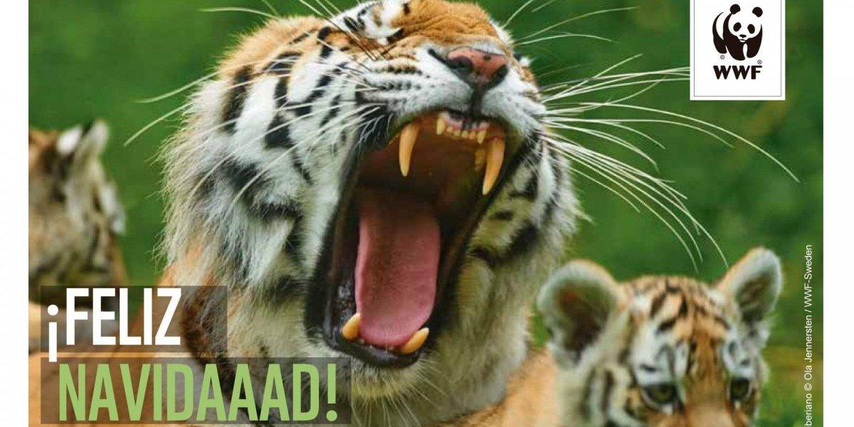 WWF llama a apoyar la conservación de la naturaleza con curiosa campaña navideña