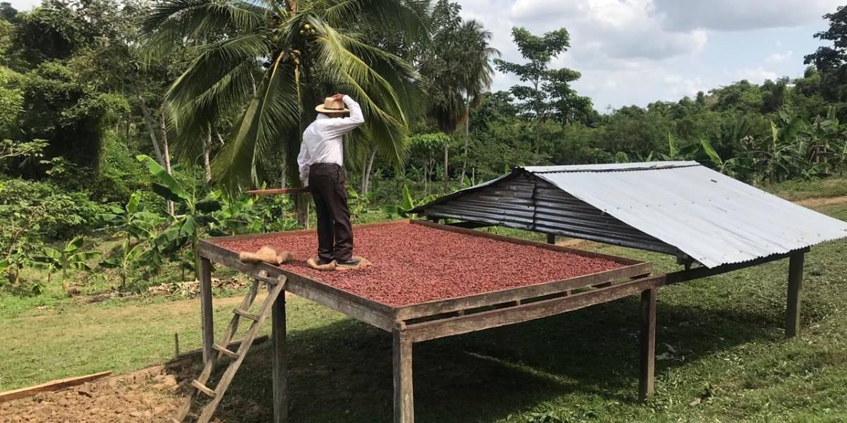 Víctimas logran salir adelante gracias al cacao