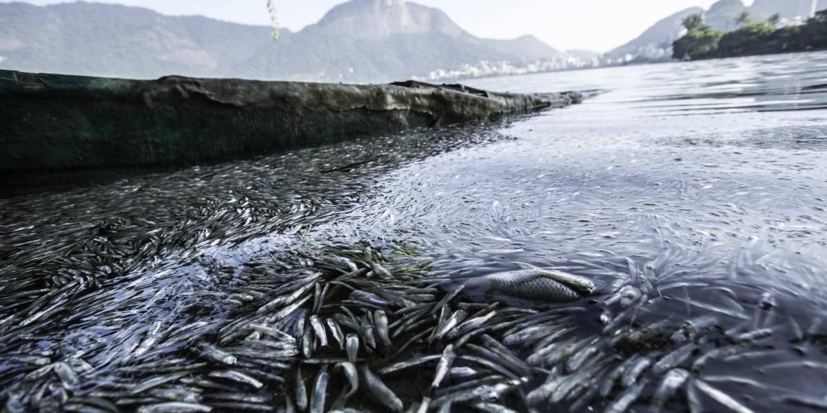 Calor mata toneladas de peixes na Lagoa Rodrigo de Freitas, no Rio