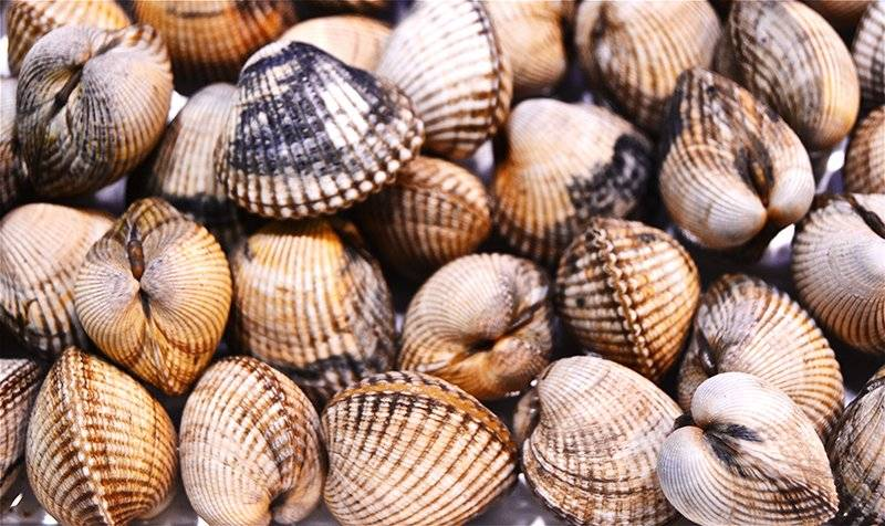 Recomiendan no consumir moluscos