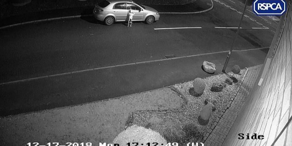 Desesperado perrito persigue el auto de su dueño tras ser abandonado